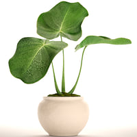 tropical plant bush 3D model