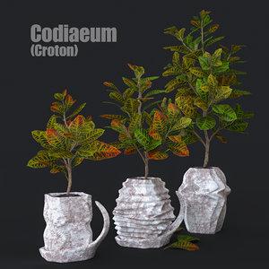 codiaeum plant 3D model