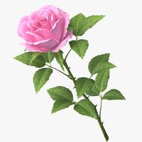 3D rose v8 model
