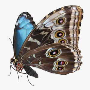 3D morpho peleides butterfly rigged