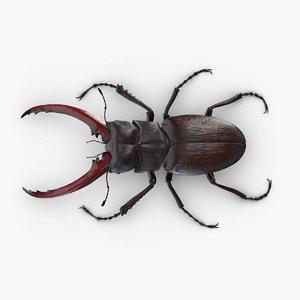 stag beetle lucanus cervus 3D
