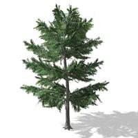 Tree - 00012