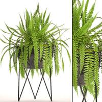 fern 3D model