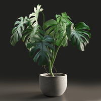 3D monstera pot model