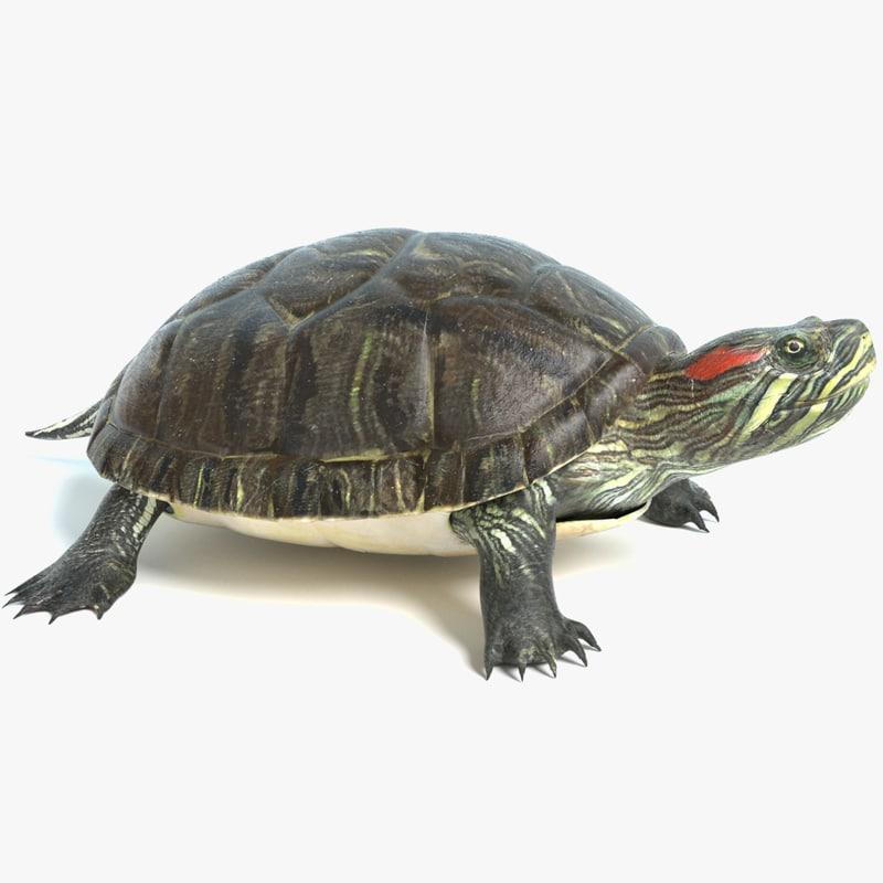 pond turtle 3D model
