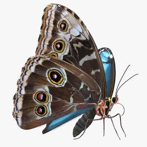 3D model peleides blue morpho butterfly