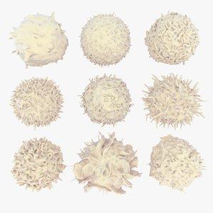 3D lymphocytes neutrophil basophil