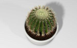 3D cactus