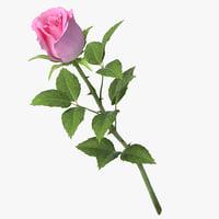 3D rose v9