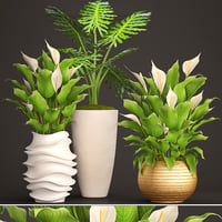 spathiphyllum plant 3D