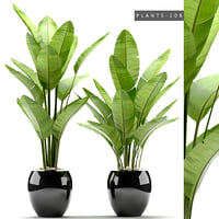 plants 108 model
