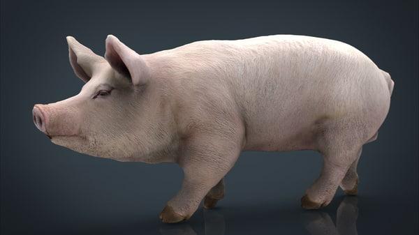 3D pig model