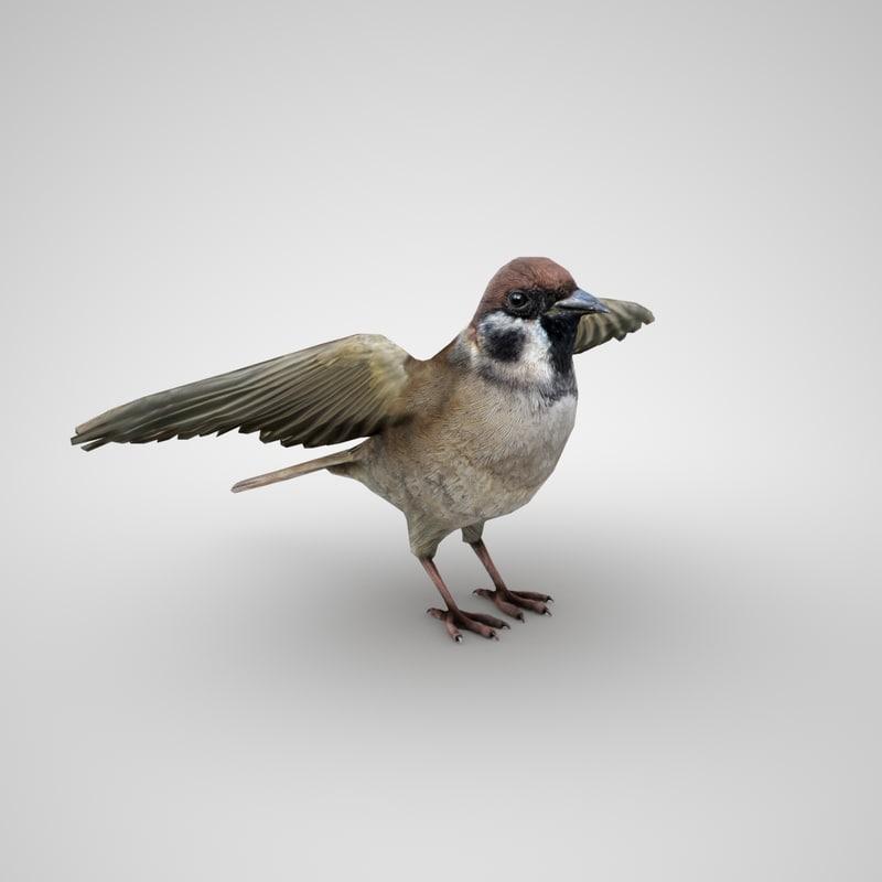 3D sparrow