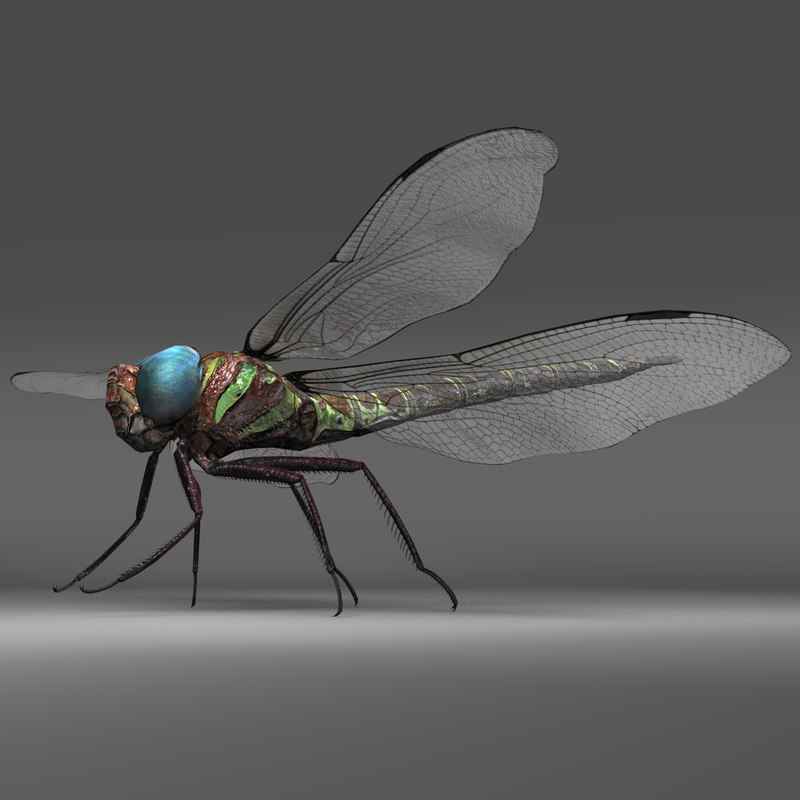 3D swamp dragon fly model