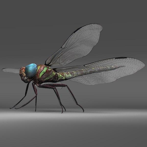 3D swamp dragon fly model