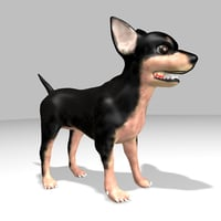 chihuahua dog 3D model
