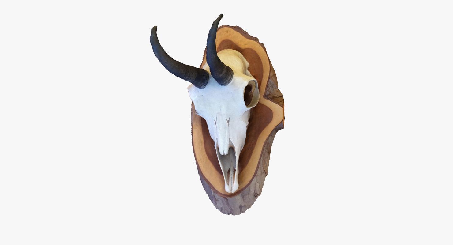 scan deer skull 3D model