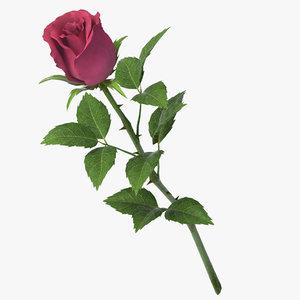 rose v9 3D model