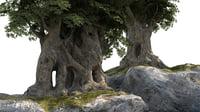 Cartoon Trees Low Poly