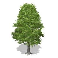 Tree - 00015