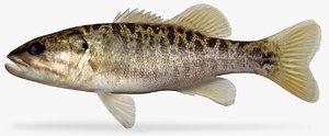 shoal bass 3D