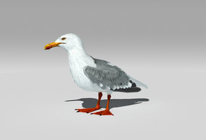 3D seagull animations