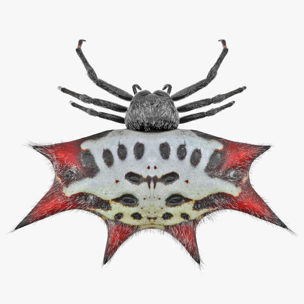 3D spiny orb weaver spider