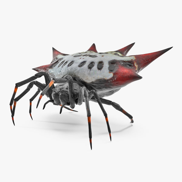 spiny orb weaver spider 3D