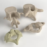 3D human vertebrae set