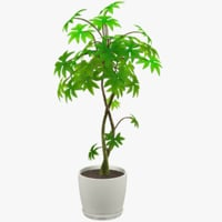 Tree in White Pot
