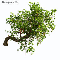 Barringtonia