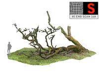 3D scanned laurel forest 16k model