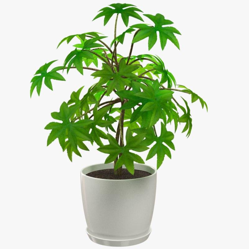 3D plant white pot