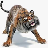 3D sumatran tiger fur colors