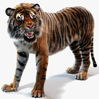 3D sumatran tiger fur colors