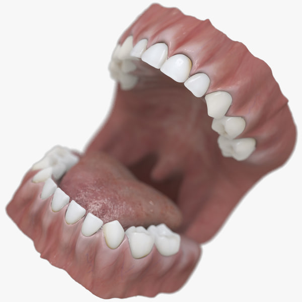 3D baby mouth model