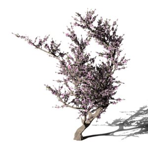 3D blossomed cherry tree