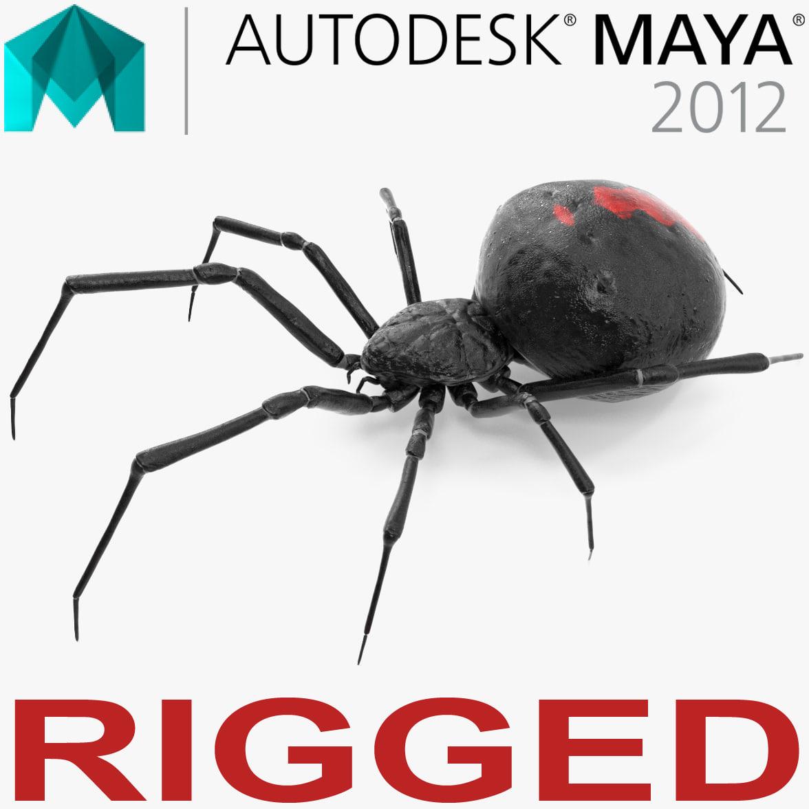 black widow spider rigged 3D
