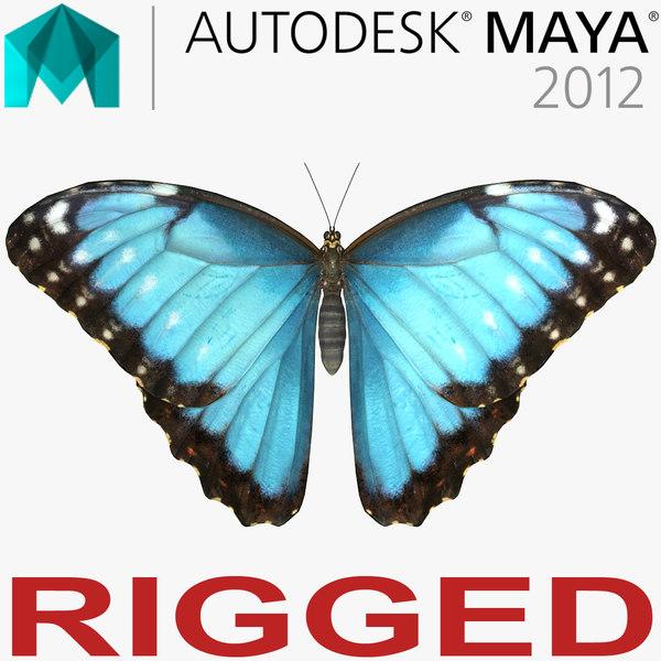 morpho peleides butterfly rigged 3D model