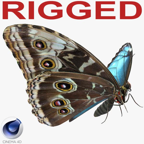 morpho peleides butterfly rigged model