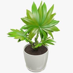 small palm pot 3D model