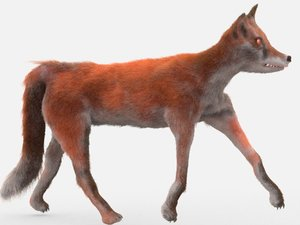 3D realistic fox