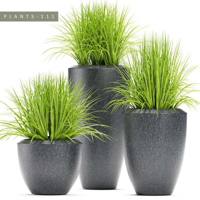 3D plants 111 grass model