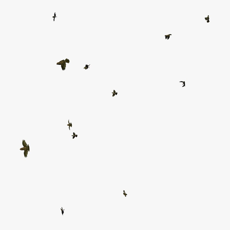 3D group sparrows flying animation