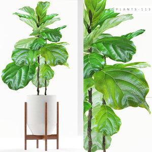 plants 113 ficus 3D
