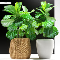 3D plants 115 ficus model