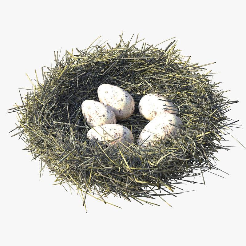 3D model bird s nest