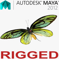 Queen Alexandras Birdwing Butterfly Rigged for Maya