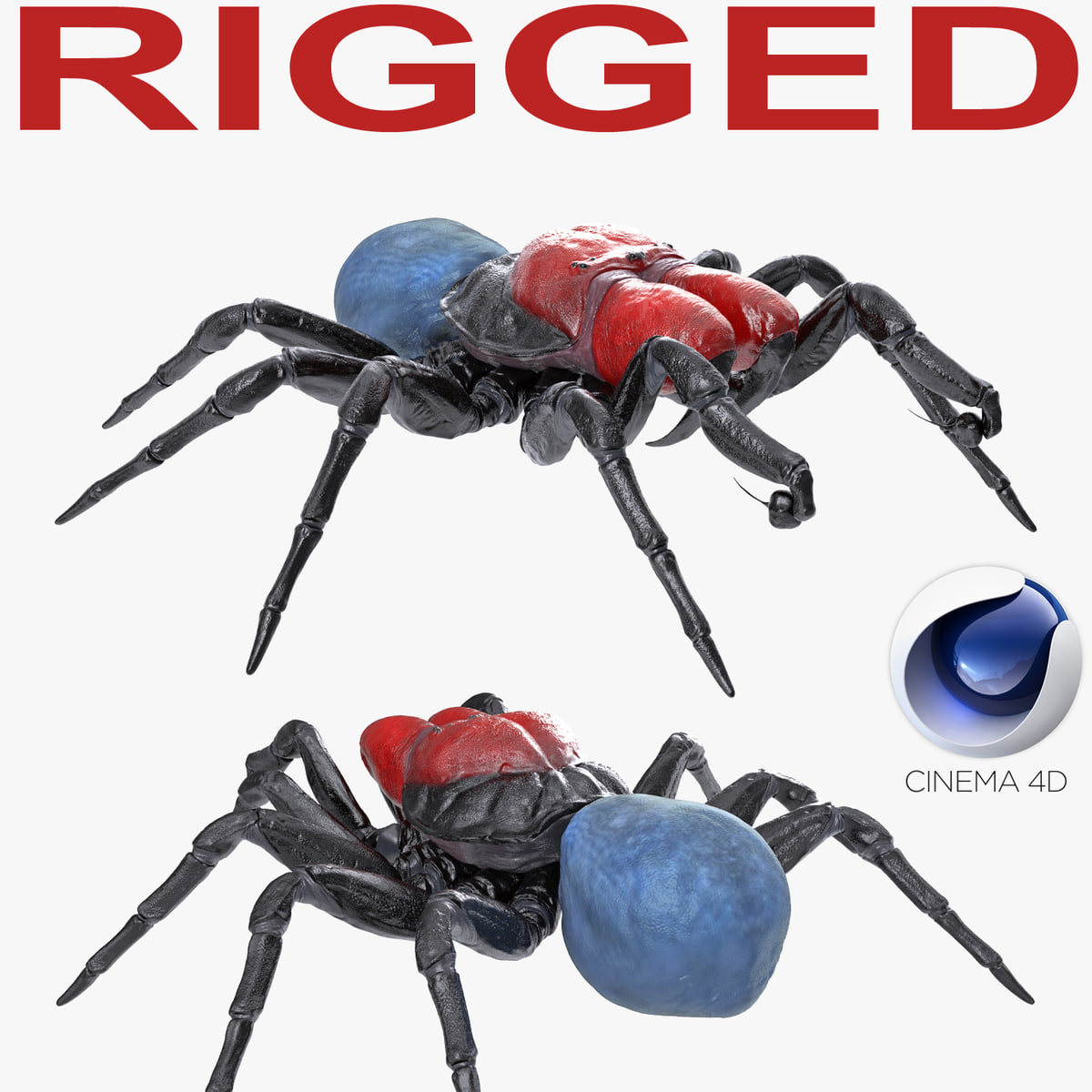 3D mouse spider rigged