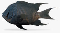 3D giant damselfish